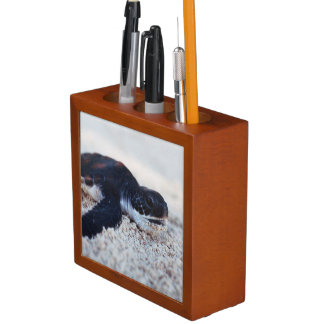 Close-Up of green sea turtle hatchings 1 Pencil Holder