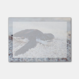 Close-Up of green sea turtle hatchings 1 Post-it Notes