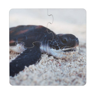 Close-Up of green sea turtle hatchings 1 Puzzle Coaster