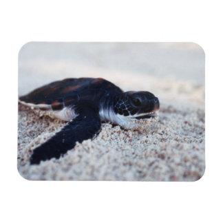Close-Up of green sea turtle hatchings 1 Rectangular Photo Magnet