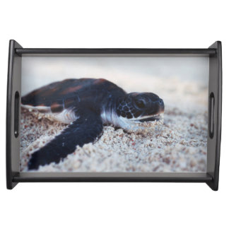 Close-Up of green sea turtle hatchings 1 Serving Tray