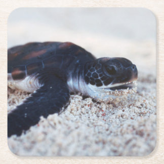 Close-Up of green sea turtle hatchings 1 Square Paper Coaster