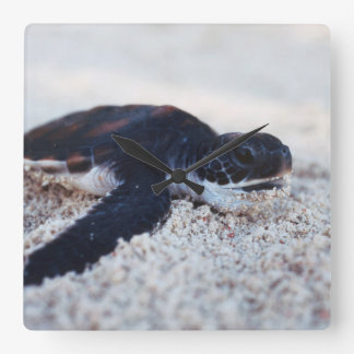 Close-Up of green sea turtle hatchings 1 Square Wall Clock