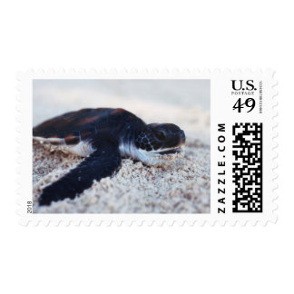 Close-Up of green sea turtle hatchings 1 Stamp