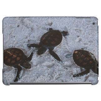 Close-Up of green sea turtle hatchings 2 Cover For iPad Air