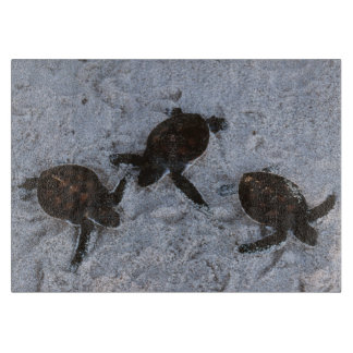 Close-Up of green sea turtle hatchings 2 Cutting Board