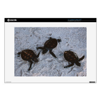 Close-Up of green sea turtle hatchings 2 Decals For Laptops