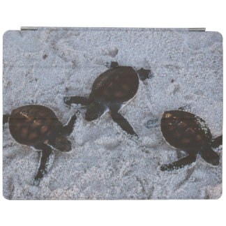 Close-Up of green sea turtle hatchings 2 iPad Cover