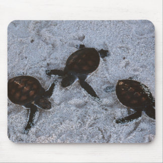 Close-Up of green sea turtle hatchings 2 Mouse Pad