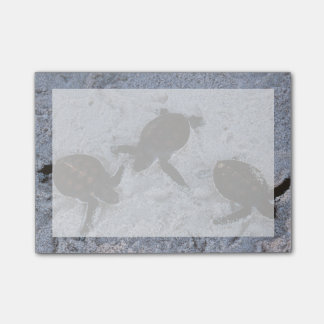 Close-Up of green sea turtle hatchings 2 Post-it® Notes