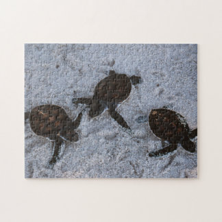 Close-Up of green sea turtle hatchings 2 Puzzle