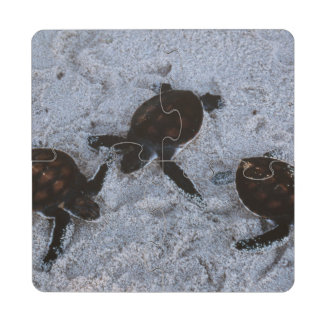 Close-Up of green sea turtle hatchings 2 Puzzle Coaster