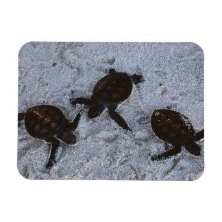 Close-Up of green sea turtle hatchings 2 Rectangular Photo Magnet