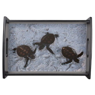 Close-Up of green sea turtle hatchings 2 Serving Tray