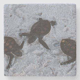 Close-Up of green sea turtle hatchings 2 Stone Coaster