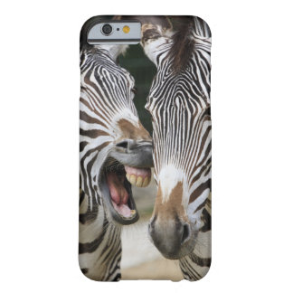 close-up of head of zebras, Equus Sp., Berlin Barely There iPhone 6 Case