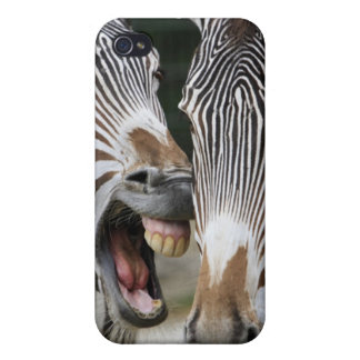 close-up of head of zebras, Equus Sp., Berlin Cover For iPhone 4