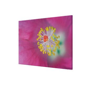 Close-up of Hibiscus flower stamen, Hibiscus Canvas Print