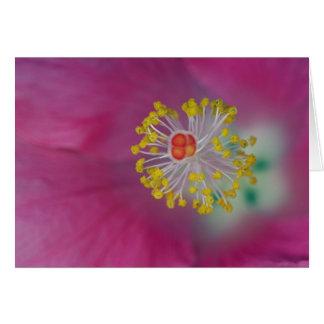 Close-up of Hibiscus flower stamen, Hibiscus Card