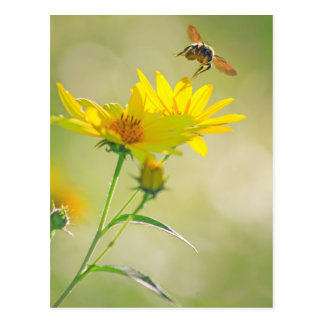 Close up of Honey Bee Flying Towards Yellow Postcard