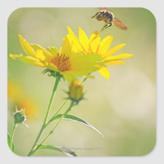 Close up of Honey Bee Flying Towards Yellow Square Stickers