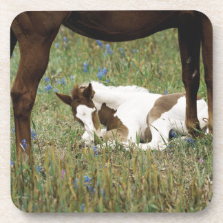 Close-up of Horse and Baby Colt Beverage Coaster