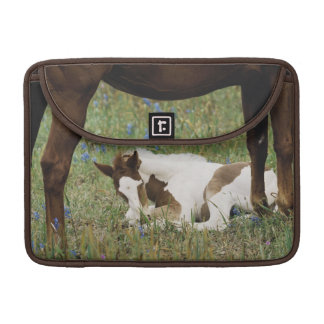 Close-up of Horse and Baby Colt MacBook Pro Sleeve