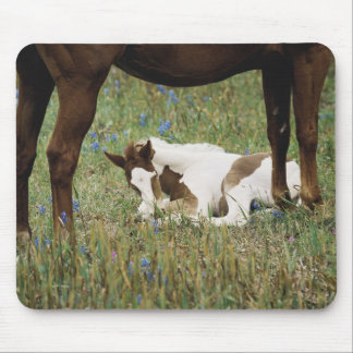 Close-up of Horse and Baby Colt Mouse Pad