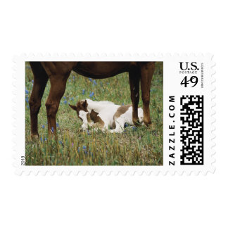 Close-up of Horse and Baby Colt Postage Stamp