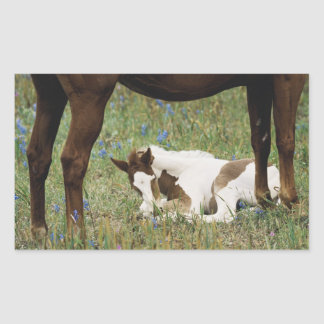 Close-up of Horse and Baby Colt Rectangular Sticker
