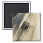 Close-up of Horse eye 2 Inch Square Magnet