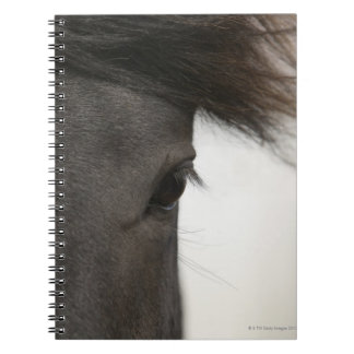Close-up of  horse eye and hair notebook