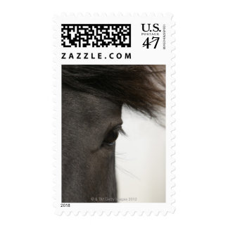 Close-up of  horse eye and hair postage