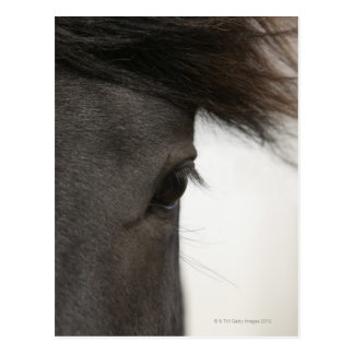 Close-up of  horse eye and hair postcard