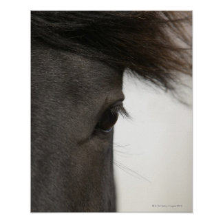 Close-up of  horse eye and hair poster
