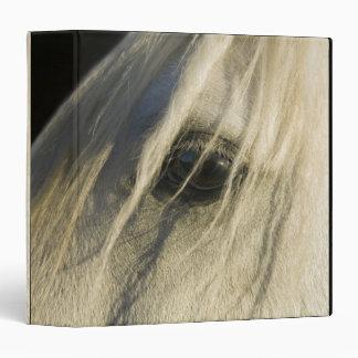 Close-up of Horse eye Binder