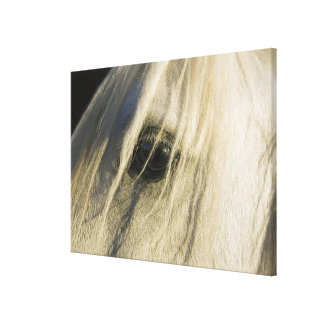 Close-up of Horse eye Stretched Canvas Prints