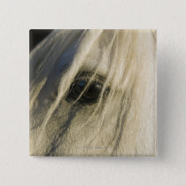 Close-up of Horse eye Pinback Button