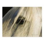 Close-up of Horse eye Postcard