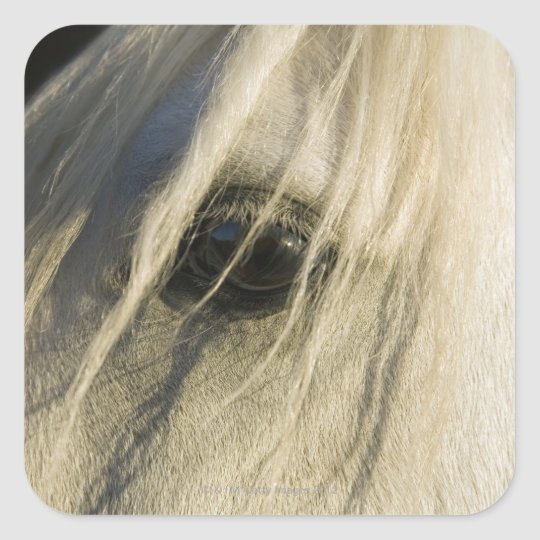 Close-up of Horse eye Square Sticker