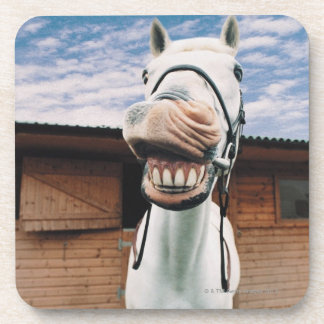 Close-up of Horse with Mouth Open Drink Coaster