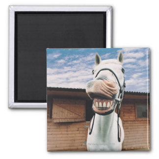 Close-up of Horse with Mouth Open Fridge Magnet