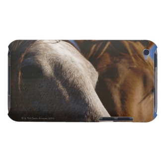 Close Up of Horses Case-Mate iPod Touch Case