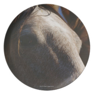 Close Up of Horses Dinner Plate