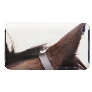 close-up of horses ear with bridal iPod touch covers