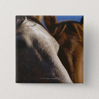 Close Up of Horses Pinback Button