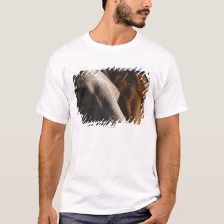 Close Up of Horses T-Shirt
