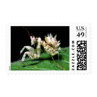 Close-Up Of Hottentot Mantis Postage