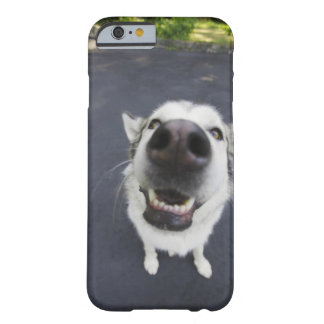 Close-up of husky's nose barely there iPhone 6 case