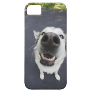 Close-up of husky's nose iPhone SE/5/5s case